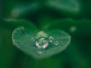 Bilde av vann på blad